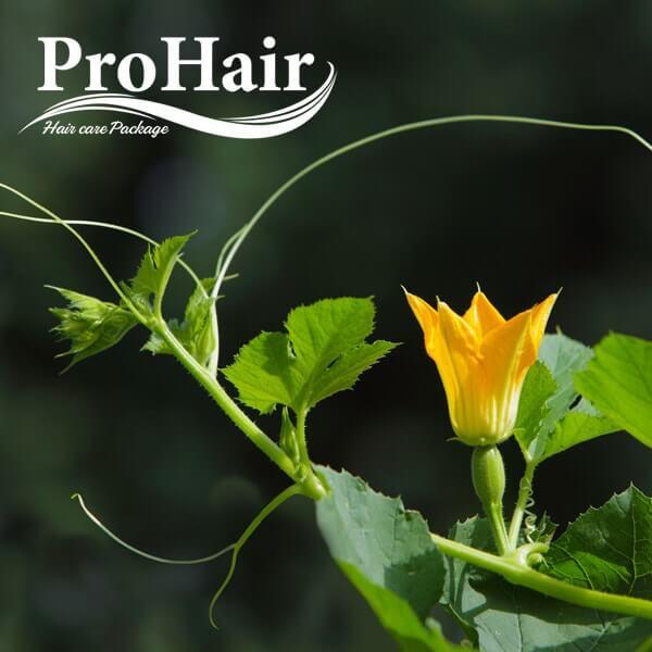 پکیج مراقبت از مو Prohair - فروشگاه سلامت گل شفا